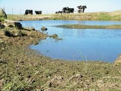 Copia de SEquía 2010-2011 053