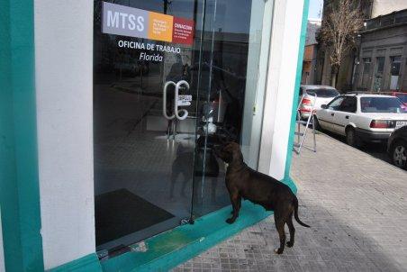Nueva oficina. Un perro intenta ingresar en las nuevas instalaciones de la Oficina de Trabajo que trasladó su local a Fernández y Rivera.