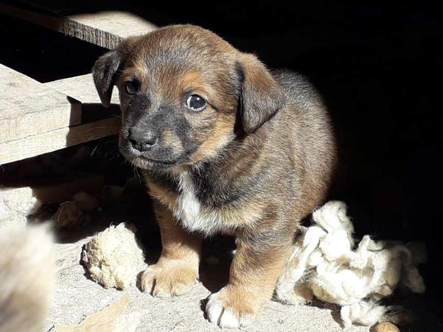 Mujeres lograron más de 2000 castraciones de perros ygatos